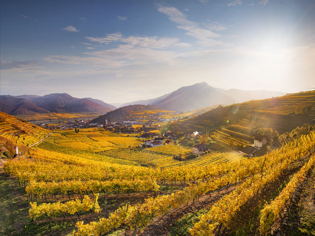 The picutre shows the vineyards of Spitz in autumn in the sunsine