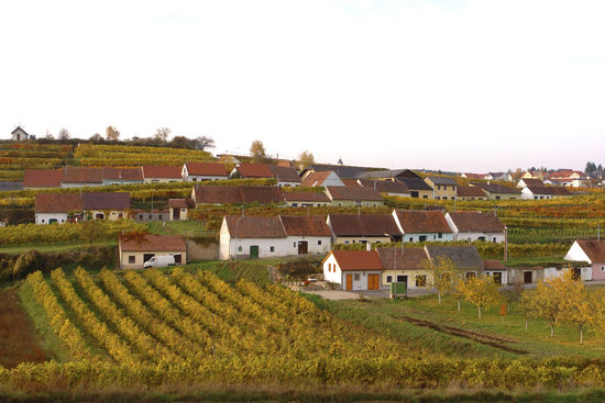 A picture shows a cellar lane in autumn, © Committee Kamptal.