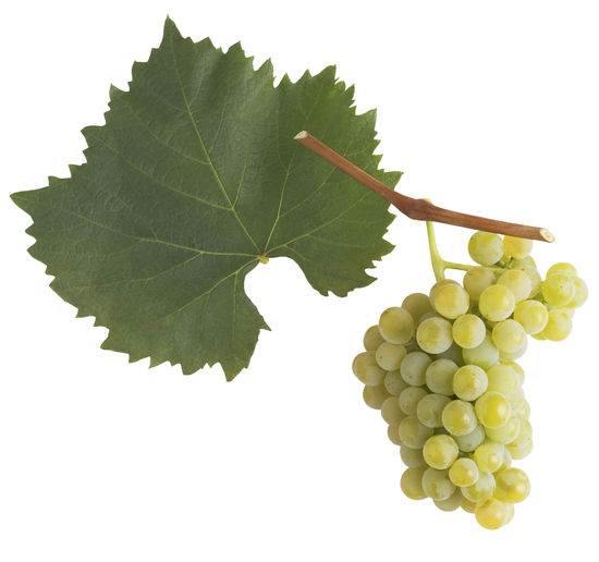A picture shows the leaf and grape cluster of the Blütenmuskateller, © AWMB/Blickwerk Fotografie