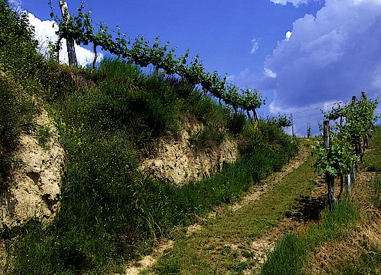A picture shows Vineyards at Wagram