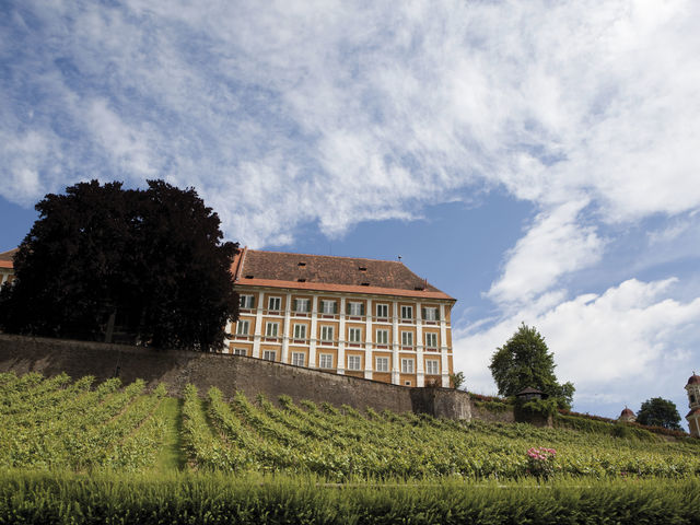 The picture shows a vineyard