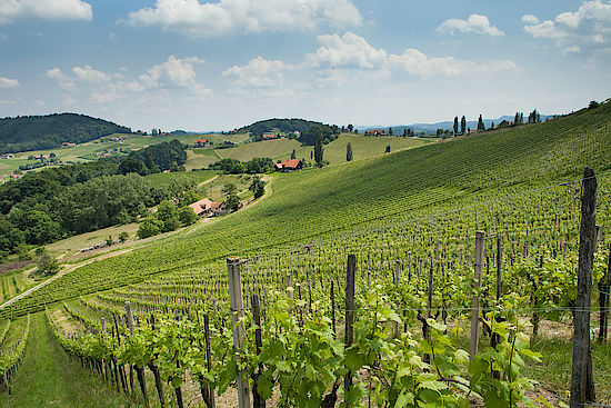 The picture shows a vineyard in the Steiermark, © AWMB/Bernhard Schramm