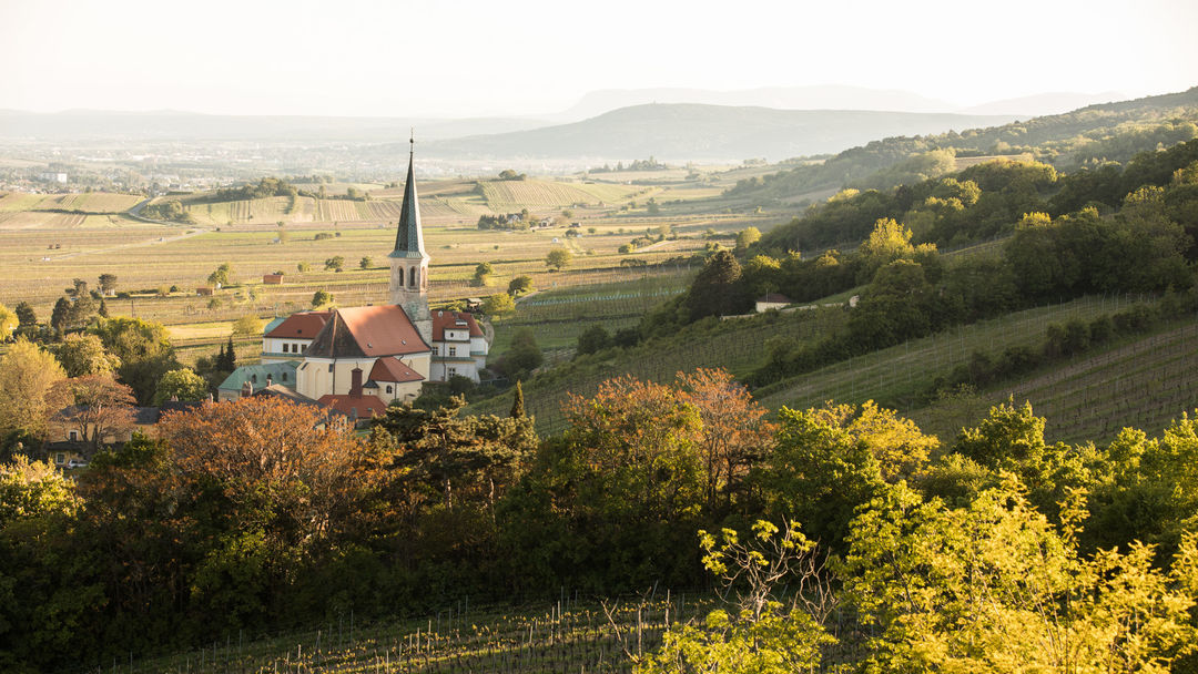 The picture shows vineyards in Thermenregion