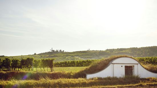 A picture shows a landscape of Weinviertel