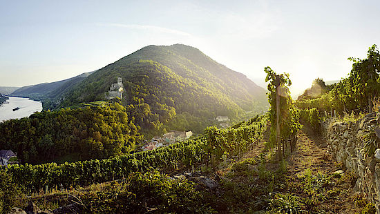A picture shows a view of Wachau
