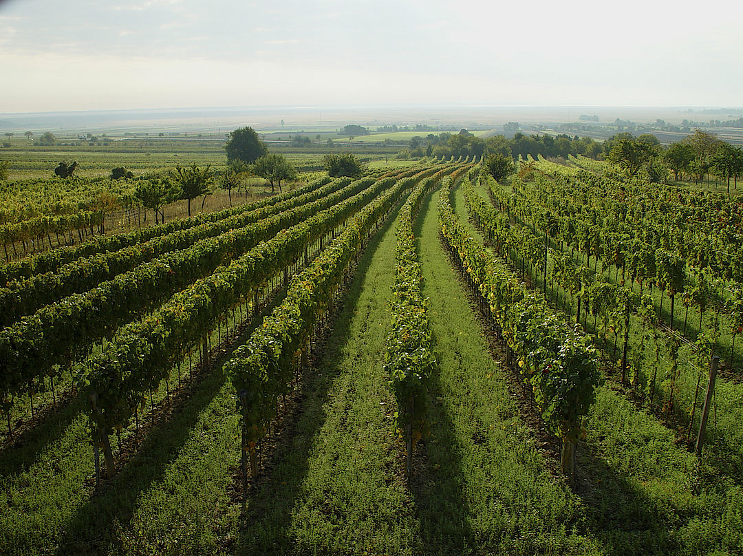 A picture shows a vineyard, © AWMB / Egon Mark.